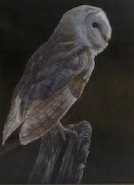 Ben Waddams - Barn Owl