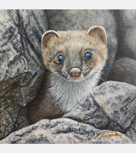 Ben Waddams - Stoat