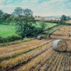 Martin Taylor - Down and up the Haybale Field
