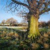 Martin Taylor - The Old Oak
